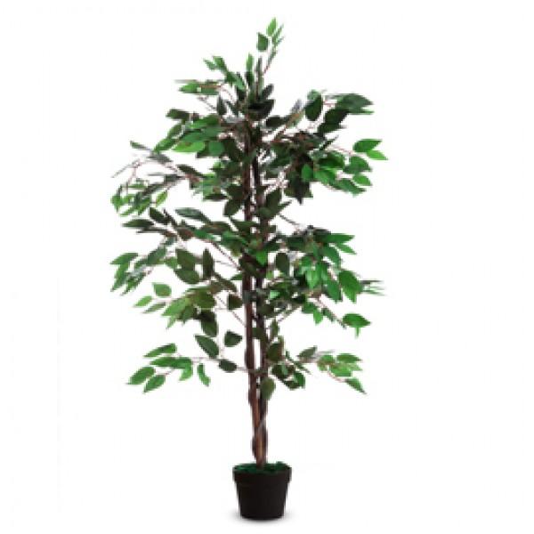 Pianta ornamentale FICUS H120cm